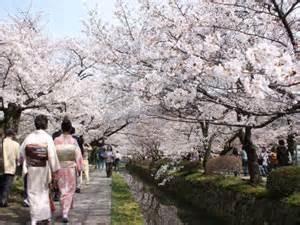4月 桜咲く哲学の道 ティオペペからは徒歩で5分ほどです