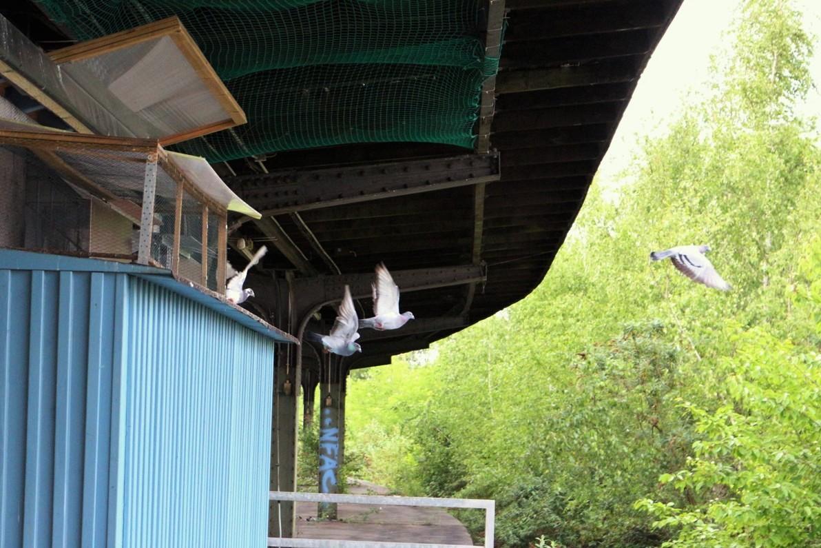 Ausflug aus dem Taubenhaus