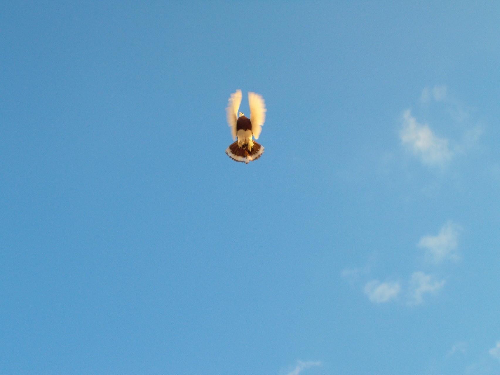 Minerva fliegt frei