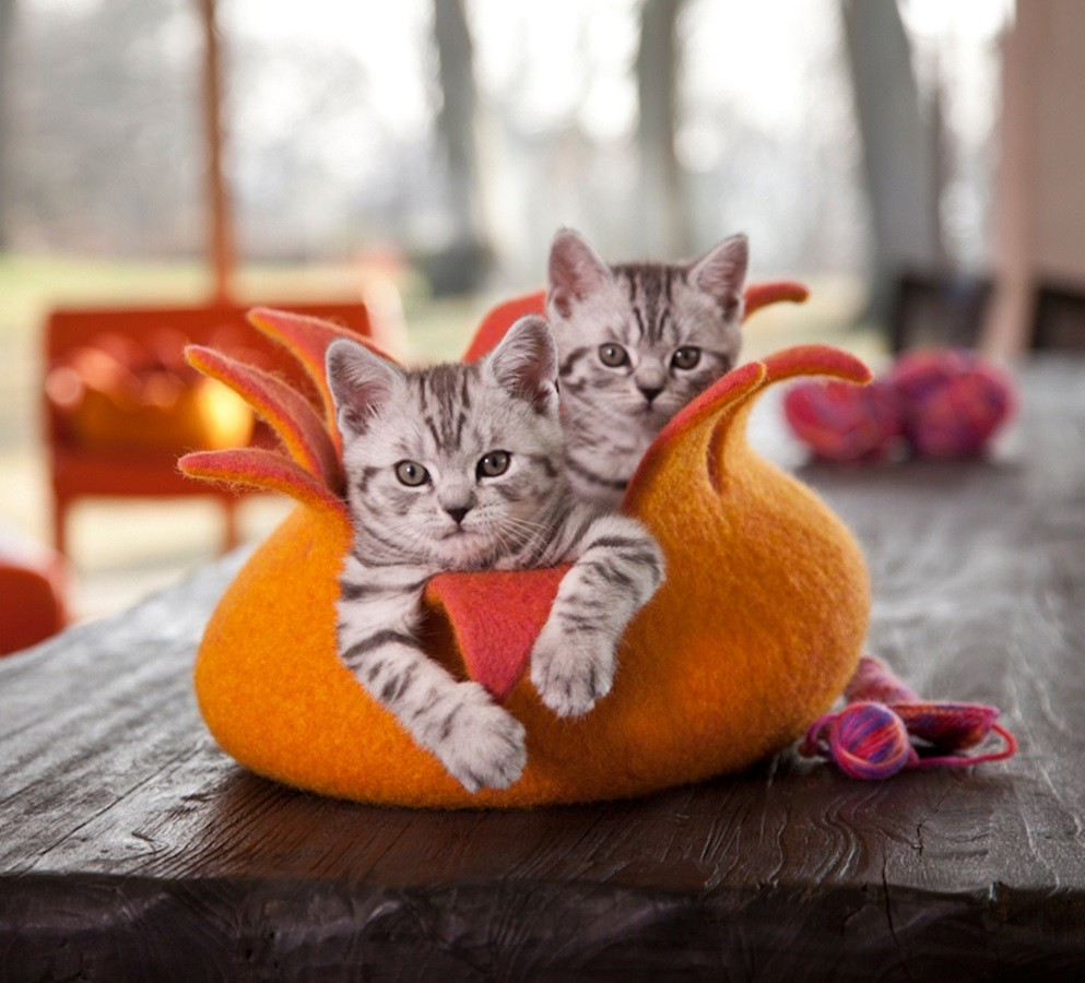 ©Whiskas, Katzenkorb, Basic oder Premium