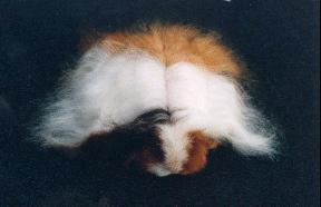 miss oui-ouit, la mascotte de l'élevage