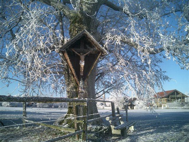 Wintermarterl - Fotos/Copyright: Franz Lutje