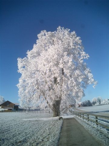 Winterfrost - Fotos/Copyright: Franz Lutje
