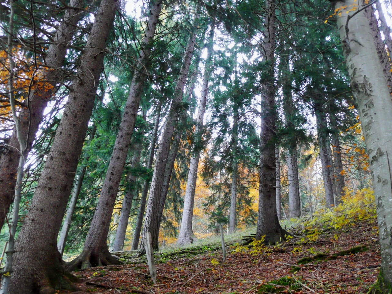 Herbstwald - Fotos/Copyright: Franz Lutje