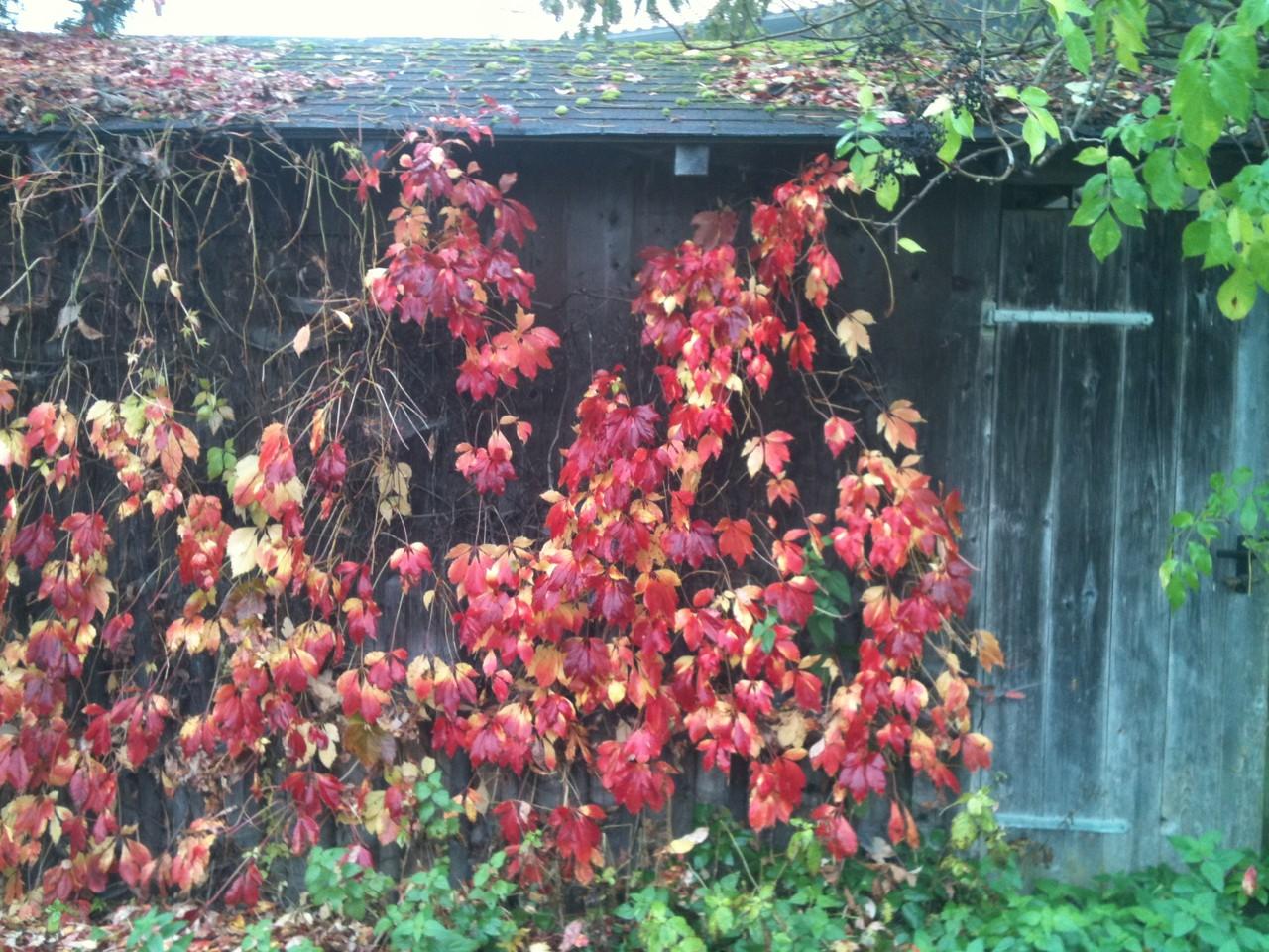 Herbstlaub - Fotos/Copyright: Franz Lutje