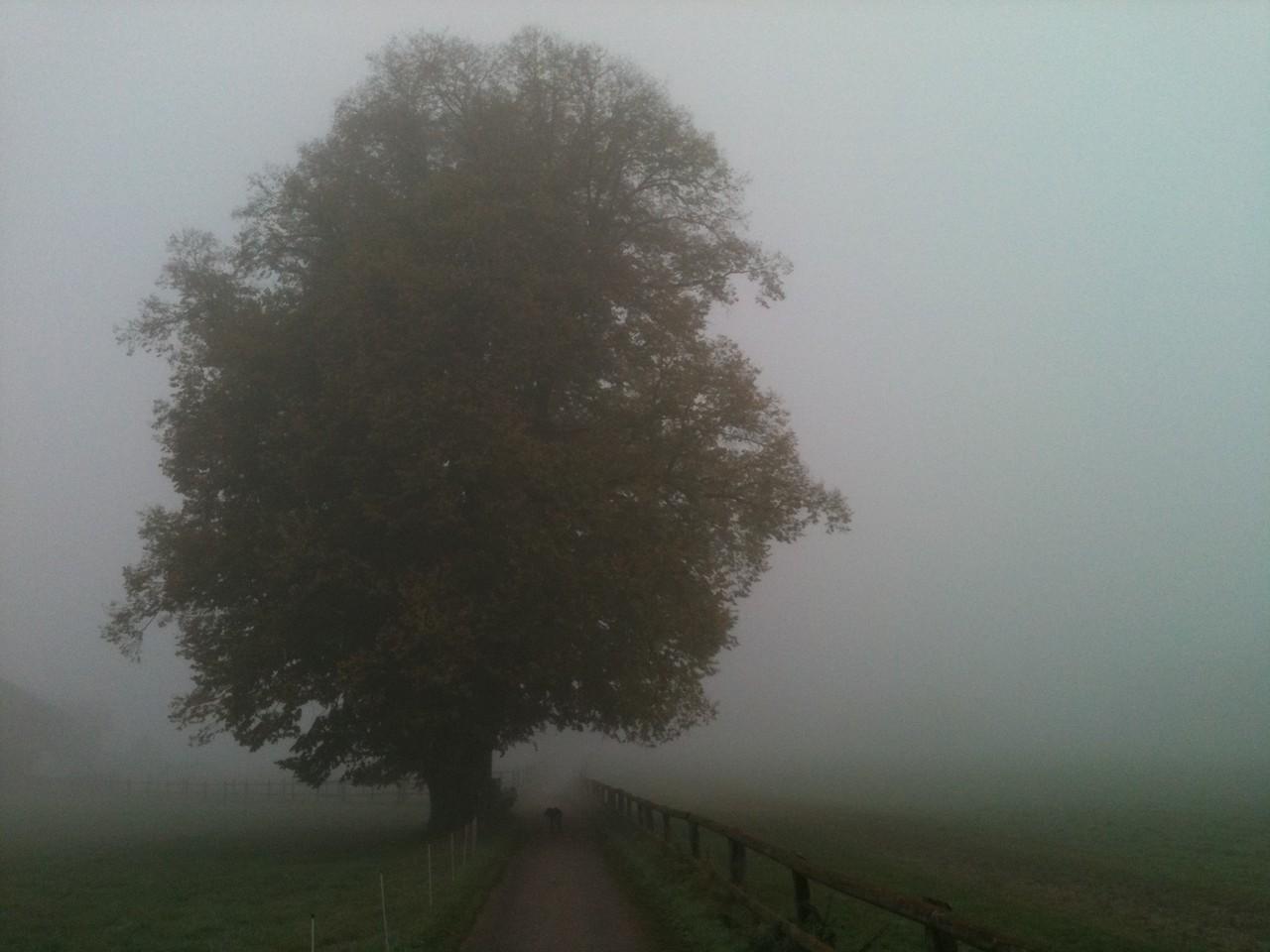 Herbstnebel - Fotos/Copyright: Franz Lutje