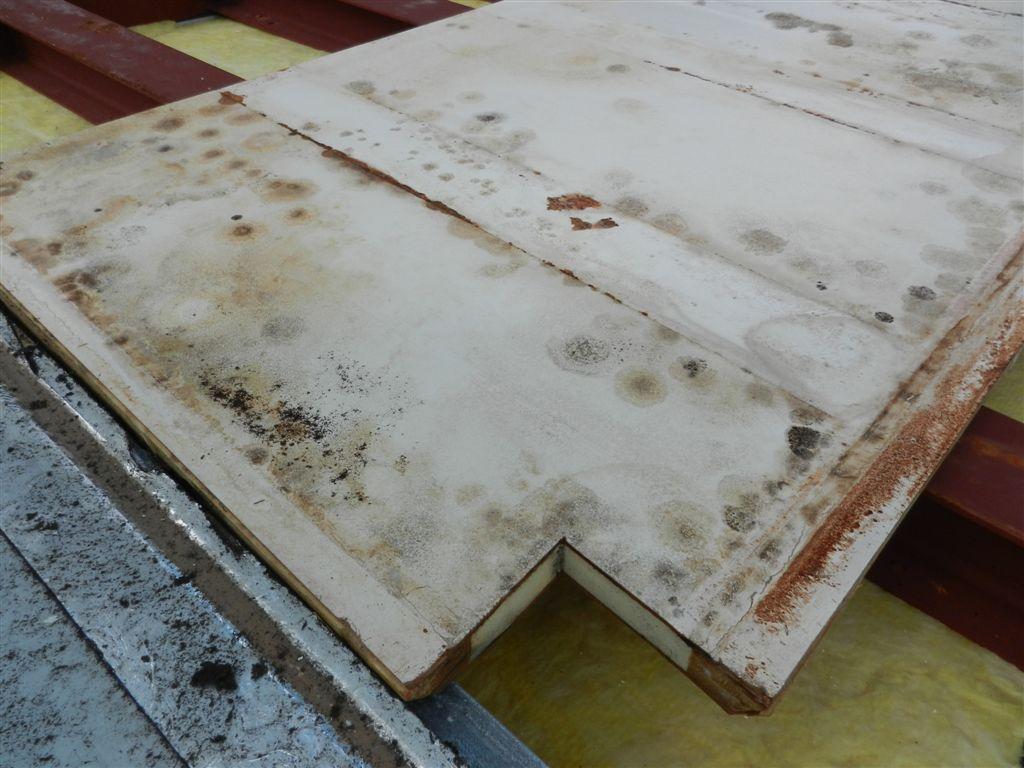 Schimmelbefall in Deckenkonstruktion