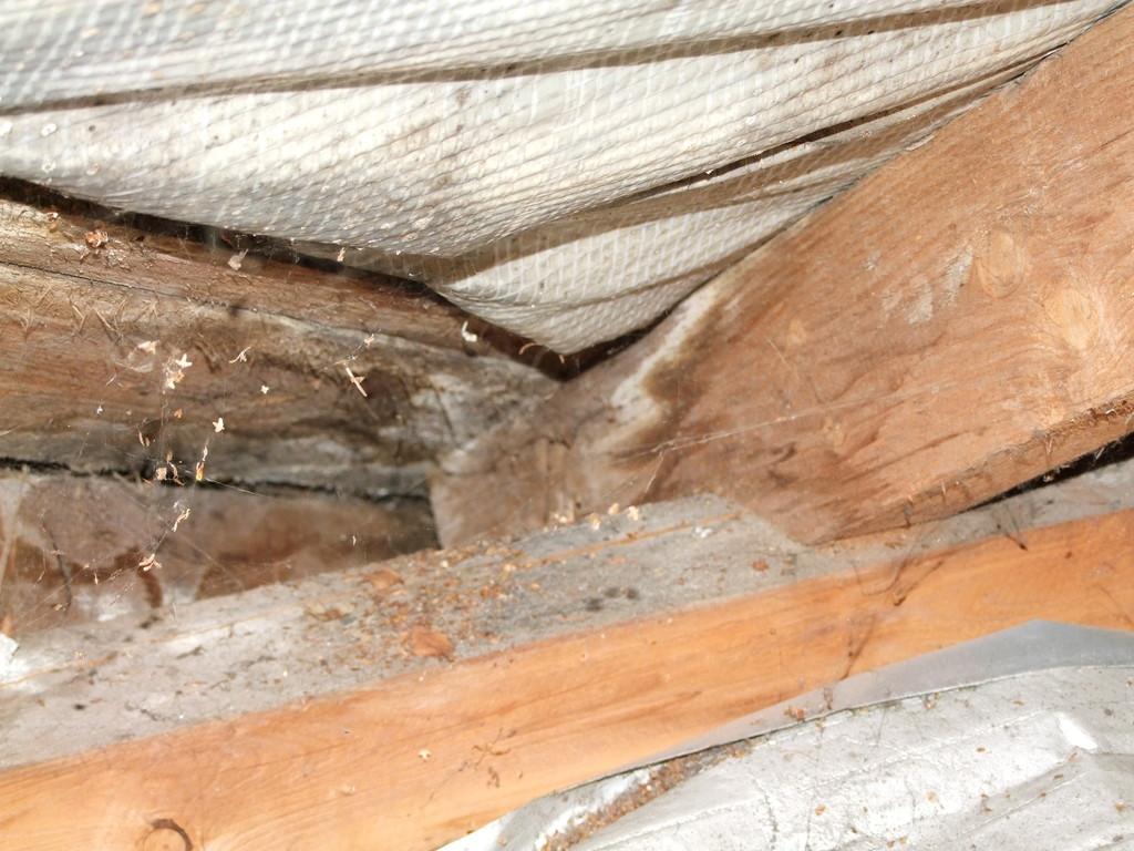 Wasserschäden durch undichtes Dach