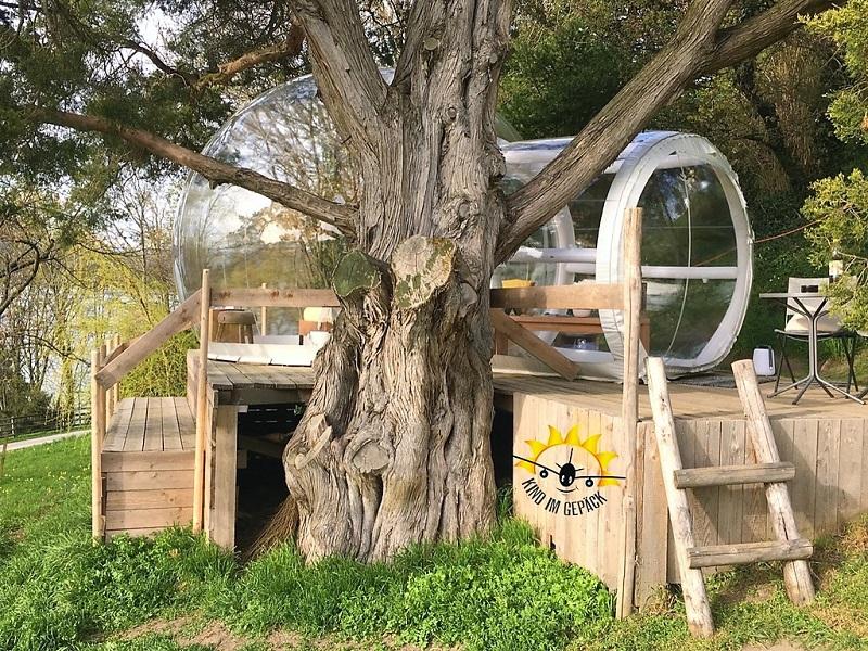 Bubble Arenenberg versteckt hinter einem großen Baum