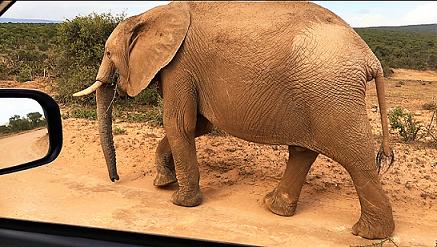 Elefant live in Südafrika, nicht im Wuppertaler Zoo.