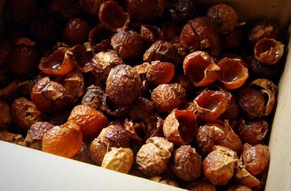 Мыльные орехи: свойства и применение