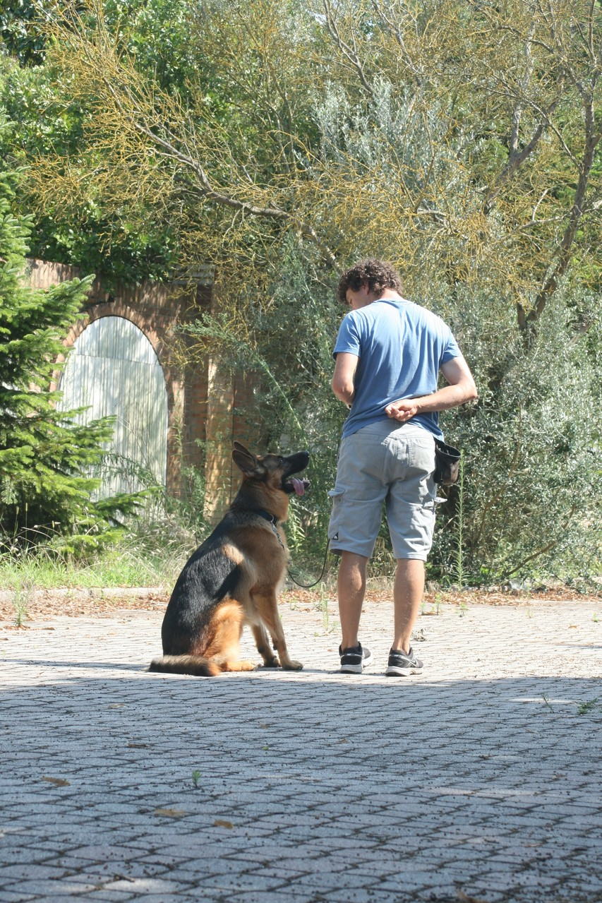 Educazione cinofila - Addestramento cani