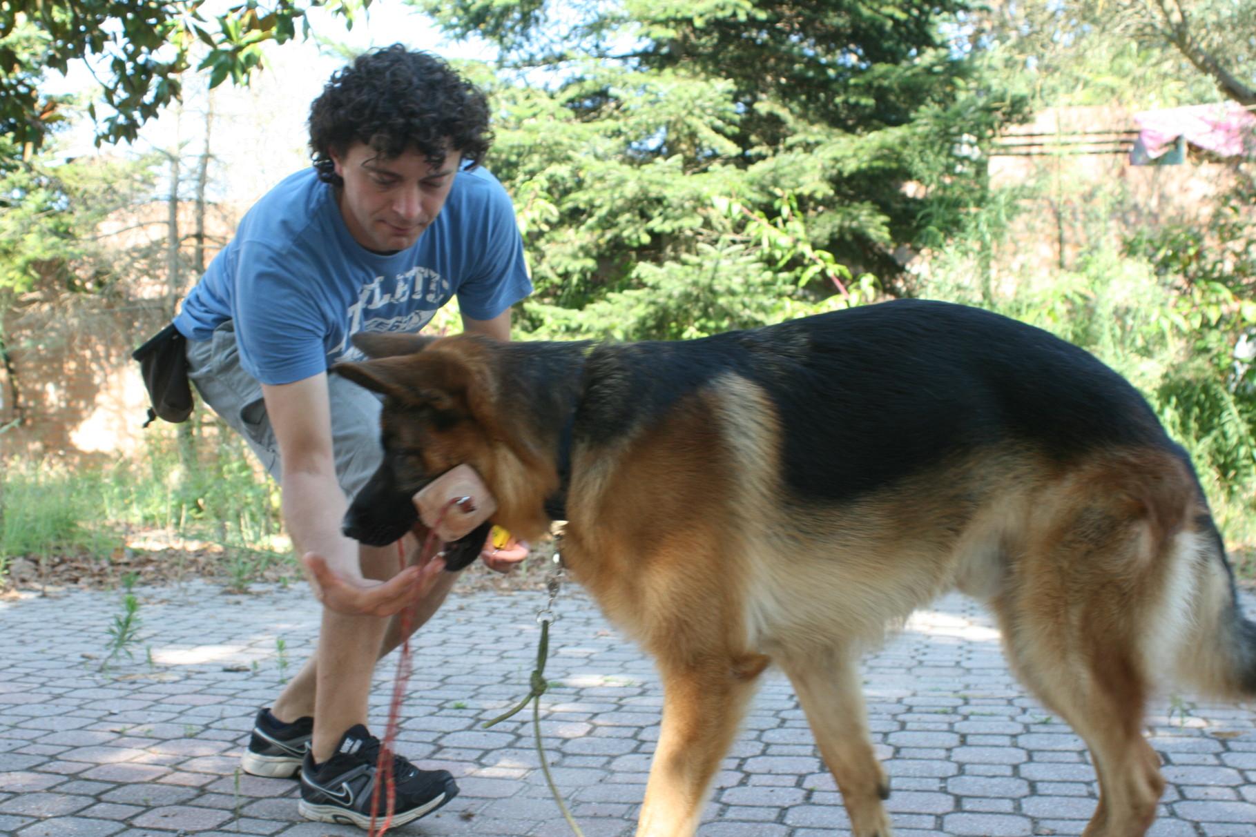 Centro Cinofilo Passion for Dogs - Bologna, Modena, Cento di Ferrara