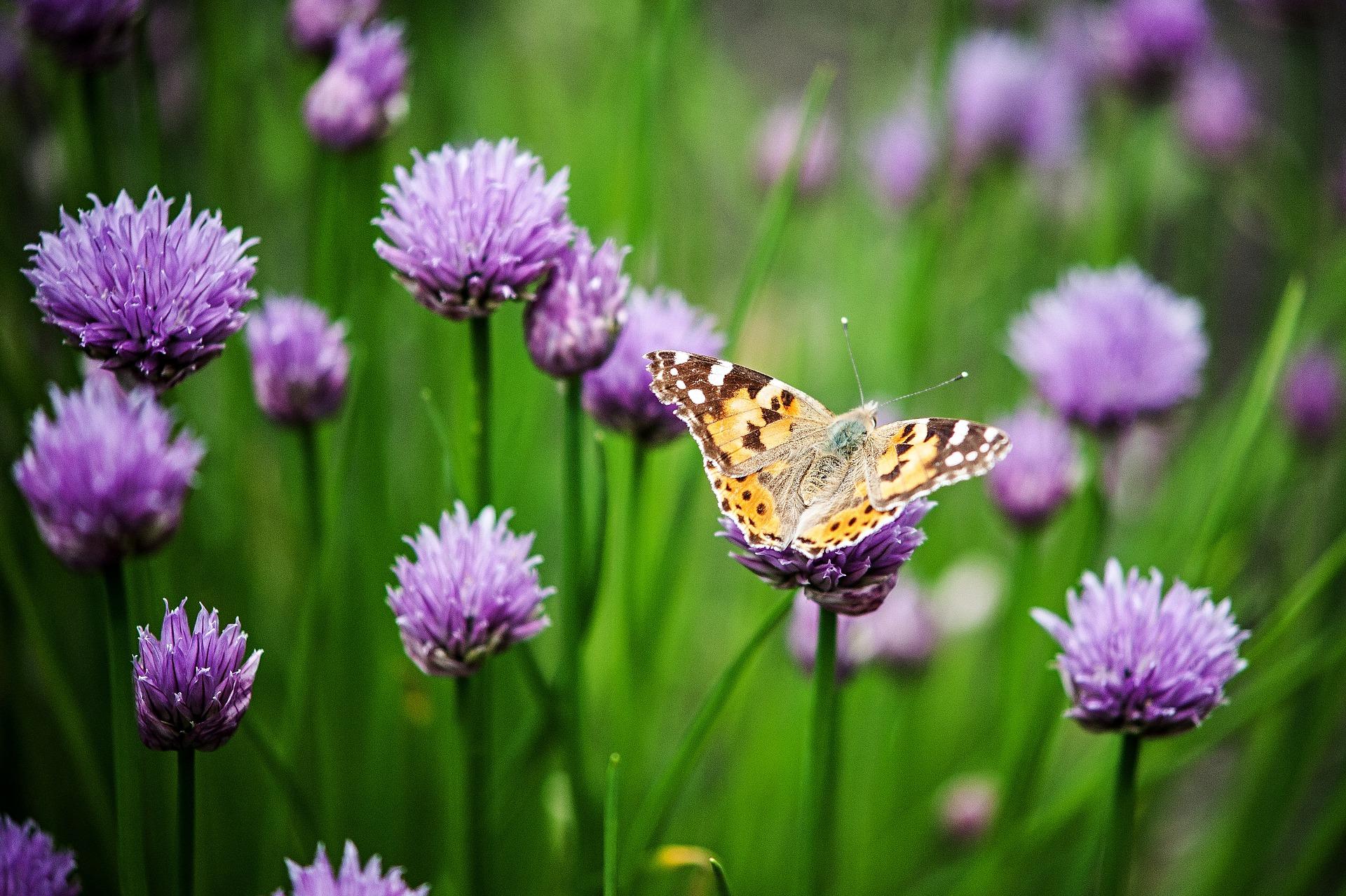 """So, 30. Juni, 14 Uhr: """"Wer schillert am schönsten?"""" Beim Kiezspaziergang entlang des Naturerlebnispfades Castanea entdecken und erkunden die Teilnehmer unter fachkundiger Leitung Schmetterlinge. Treffpunkt: Naturschutzzentrum, Hermsdorfer Straße 11 A."""
