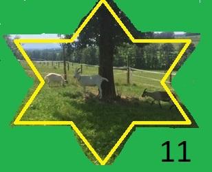 11, Ziegengruppe