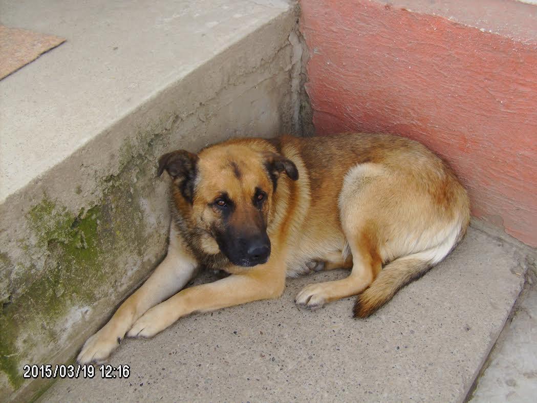 Paix - unser epilepsiekranker Hundemann, ein beinahe aussichtsloses Schicksal-