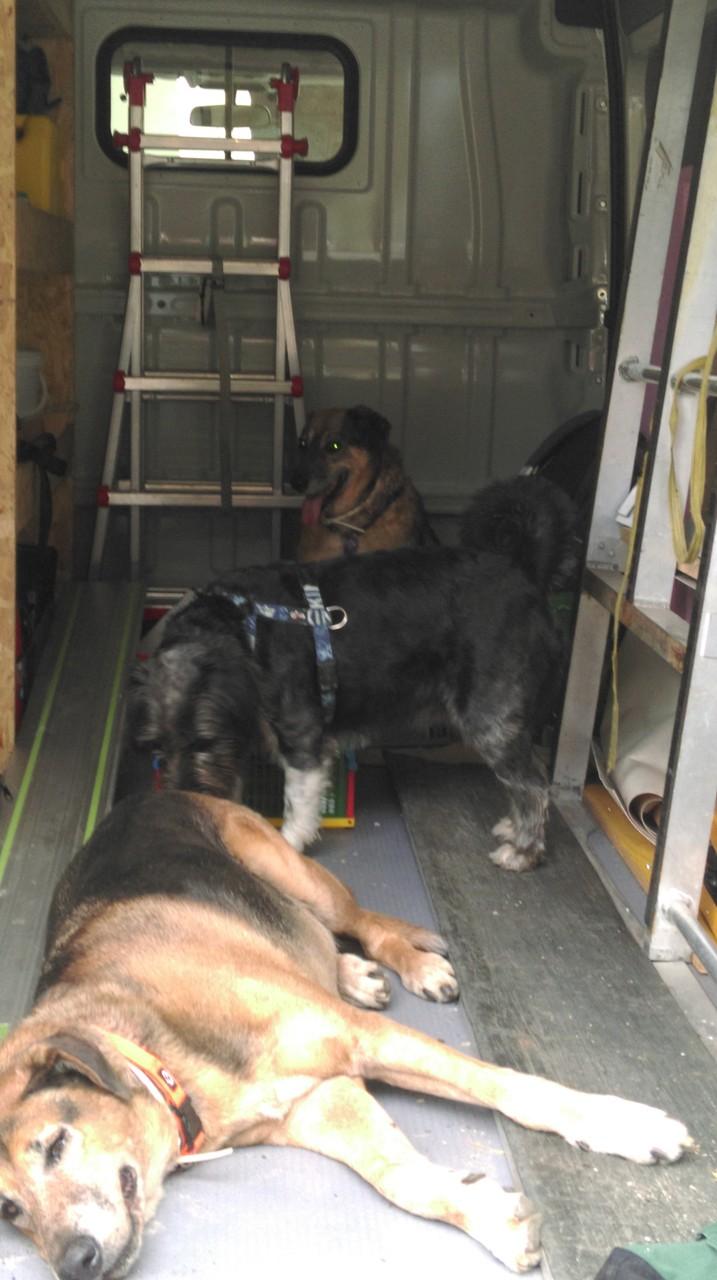 Unsere fleißigen Helferlein im Lieferwagen