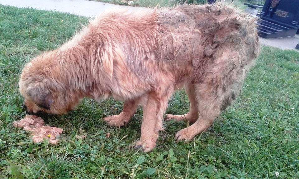 Unser Gnadentier - ein alter Hundemann fand nach der Aufnahme bei uns ...