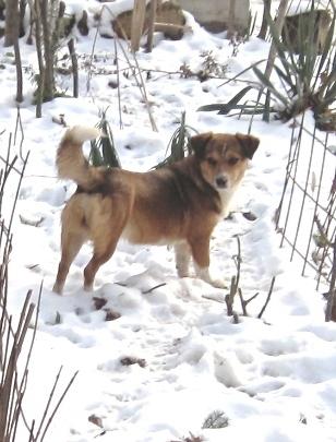 PaulINCHEN...der kalte Schnee als Streetdog ihre Unterlage