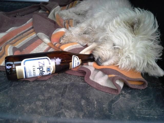 und i mei Bier :-)