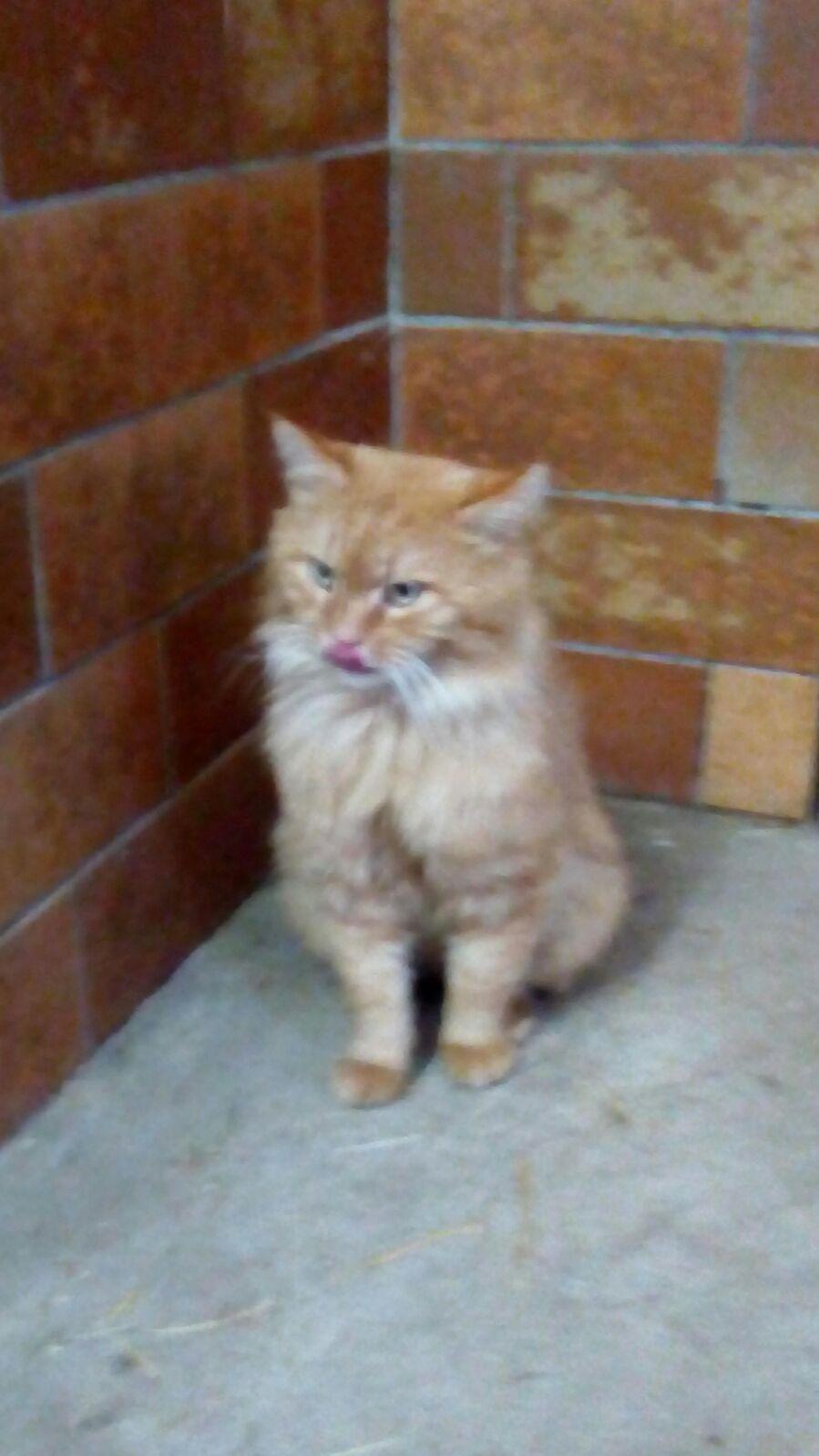 Garfield suchte einen Gnadenplatz...