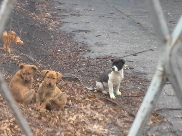 Eine kleine verlorene Hundekinderfamilie bei deren Rettung, ein Kleeblatt für dieses wir so lange um Hilfe baten.....