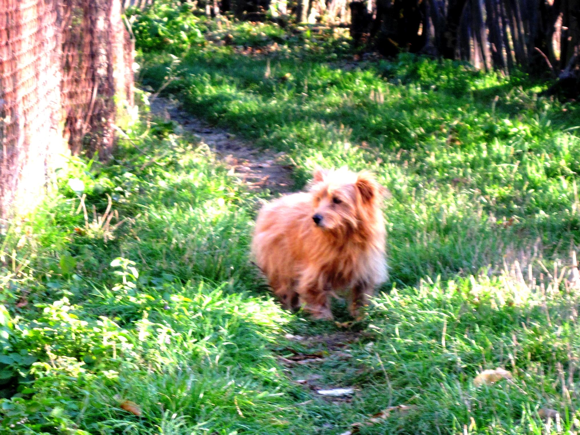 Chicca...armes, uraltes Hundemädchen - soviele nie endende Jahre...