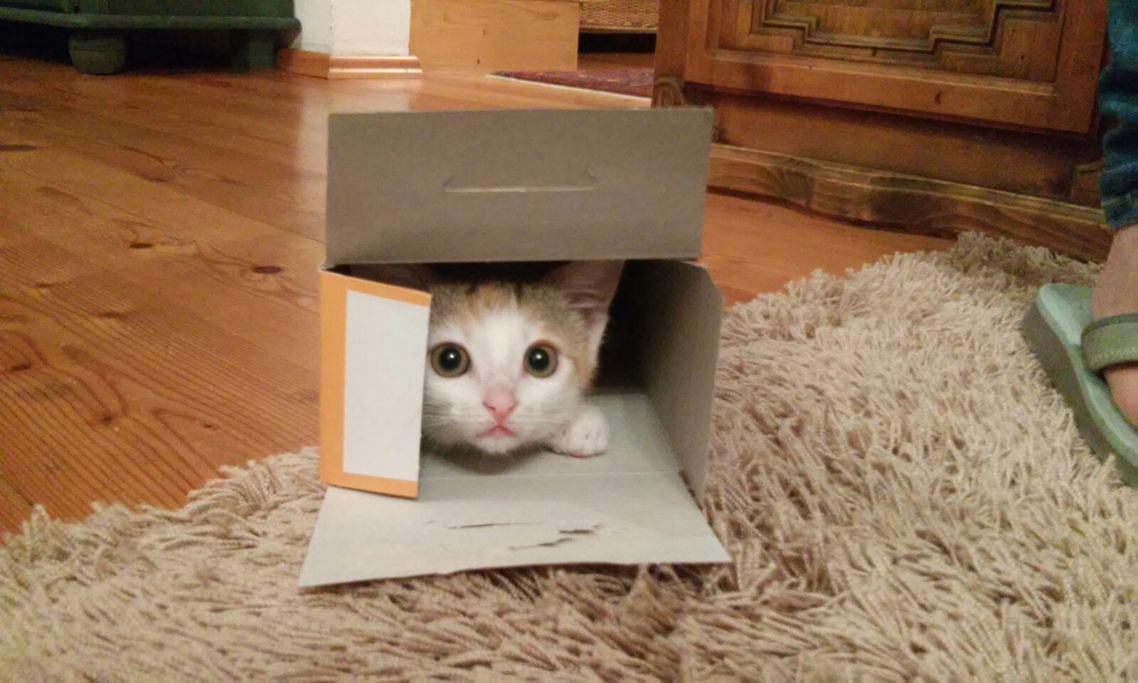 Zwutschgerl, nun Baileys - eine Tochter von unserer scheuen Katzenmama Minki