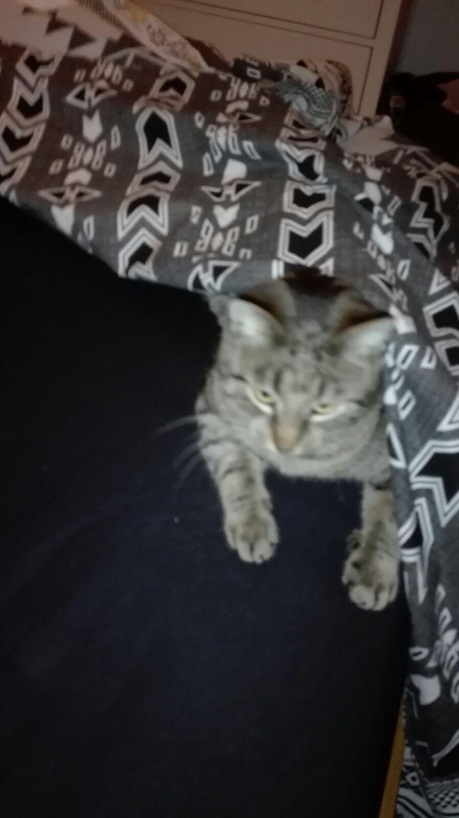 Unsere wundervolle Katzenmami Calista - (Katzenfamilie Fantasy)