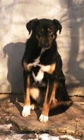 Alter gebrochener Hundebub SIR Robbin.... 7 Jahre Isolation...sollte es sein Ende sein....