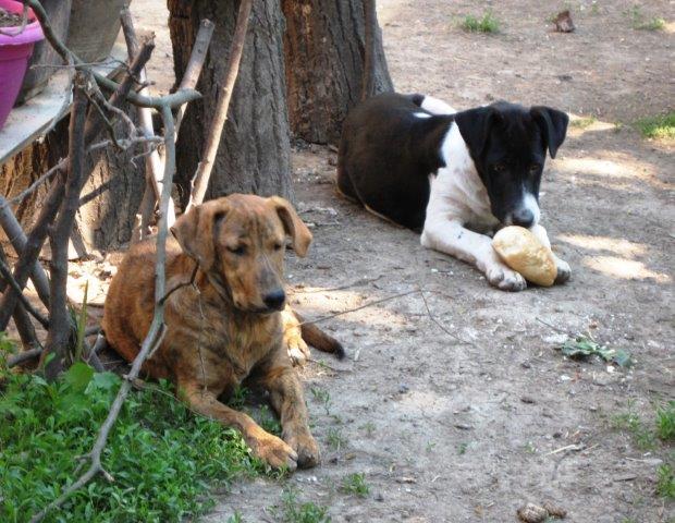 Hundekinder, nur wenige Wochen alt, sh. Bericht - das Tal der Hoffnungslosigkeit -