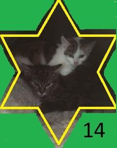 14. Kelly und Tigger