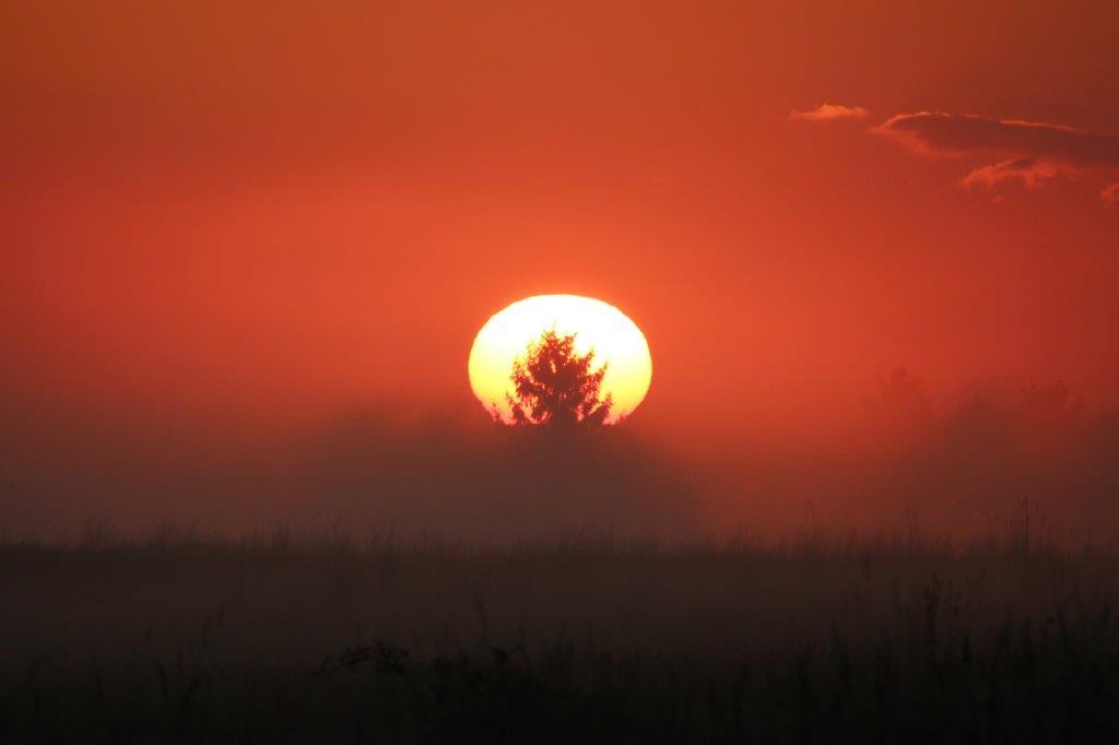 Im Waldviertel muss die Sonne ja hinter einem Baum aufgehen!