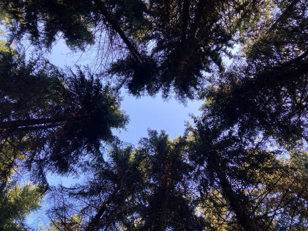 Diskussionsrunde großer Bäume Im Wald
