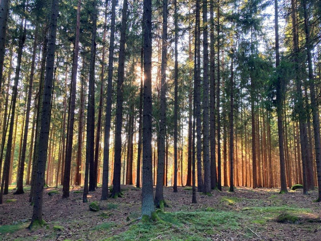 Viel Licht hinter dem Wald