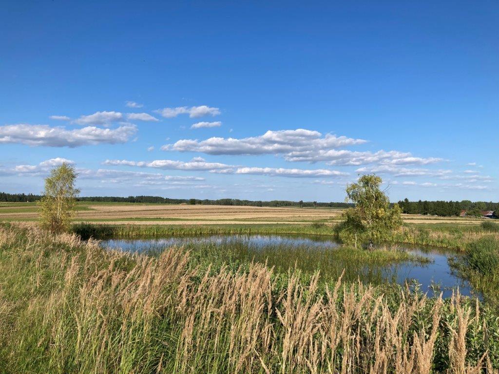 Teichlandschaft bei Ullrichs