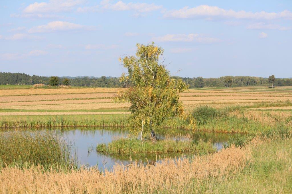 Teich bei Ullrichs
