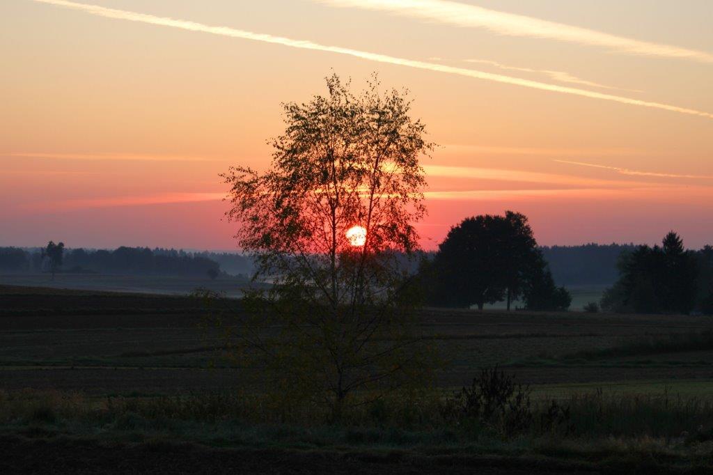 Die Sonne erscheint schon wieder hinter einem Baum!