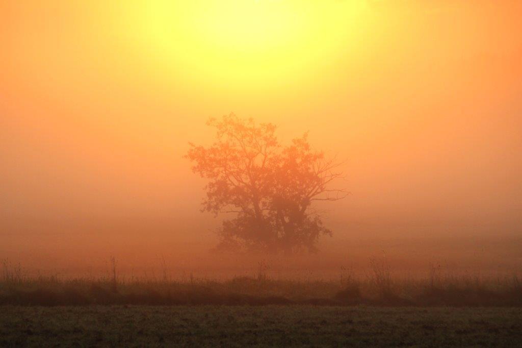 Malerische Mischung aus Morgennebel, Licht und Baum