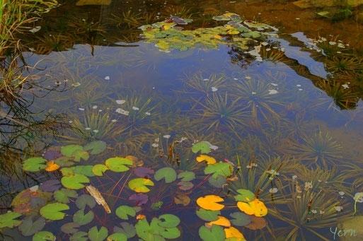 Teich mit Wasserpflanzen und einem Frosch in der Mitte