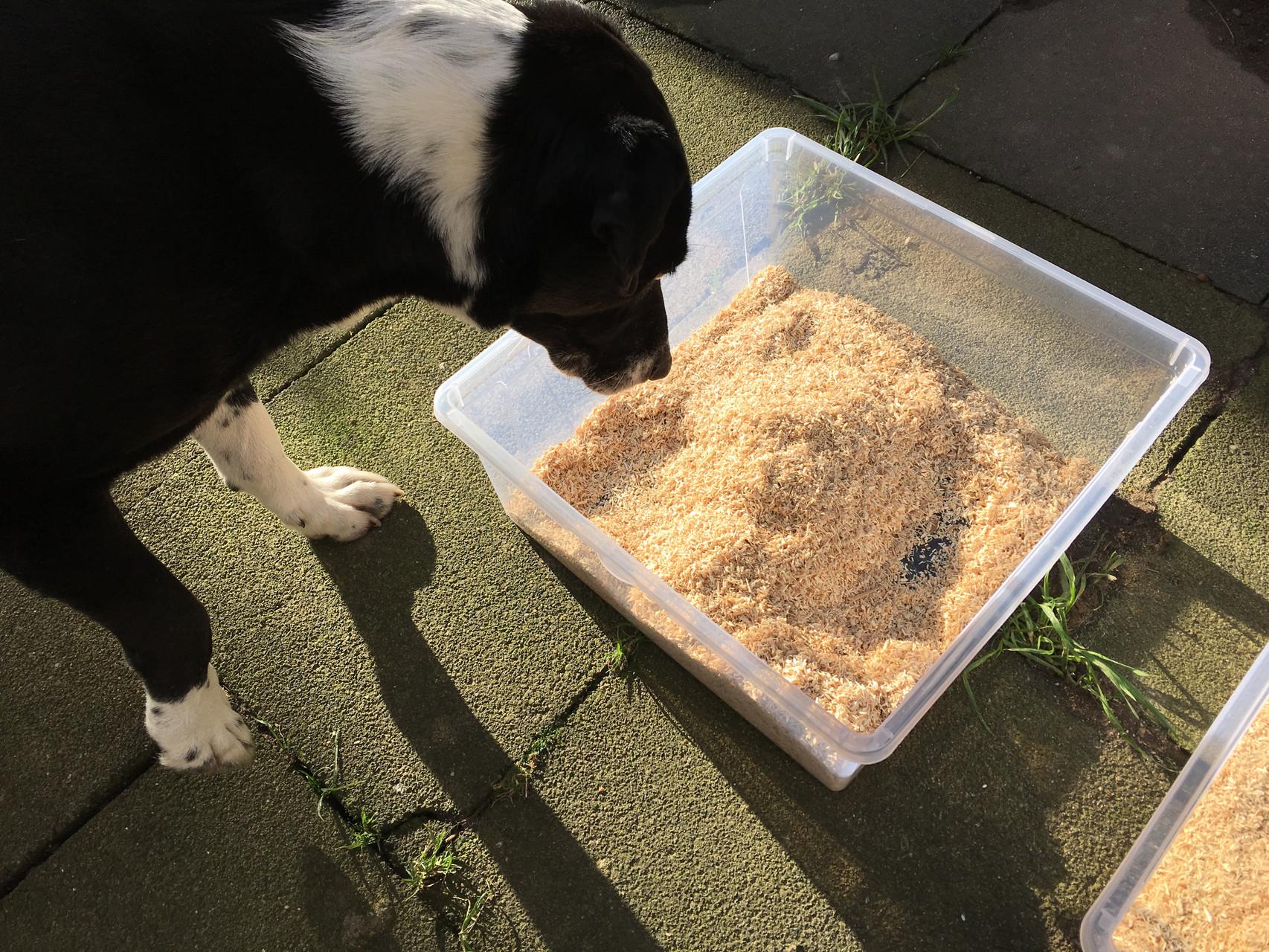 Mein Hund Linux an der Schnüffelkiste