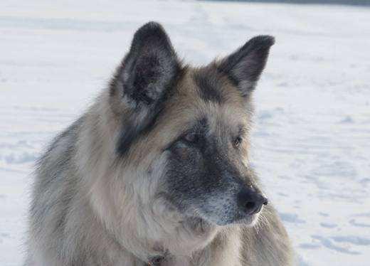 Eines der letzten Bilder von Kessy mit über 16 Jahren