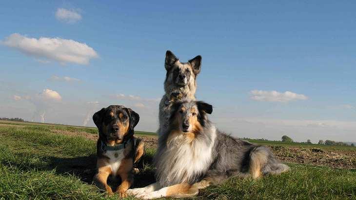 Kessy und der artgenossenschaftliche Teil ihrer Familie