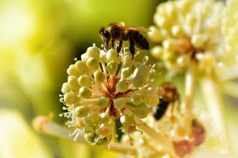 Home - Bienvenido a WeProBee - abejas saludables.