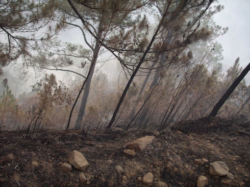 乾季に起こる山火事