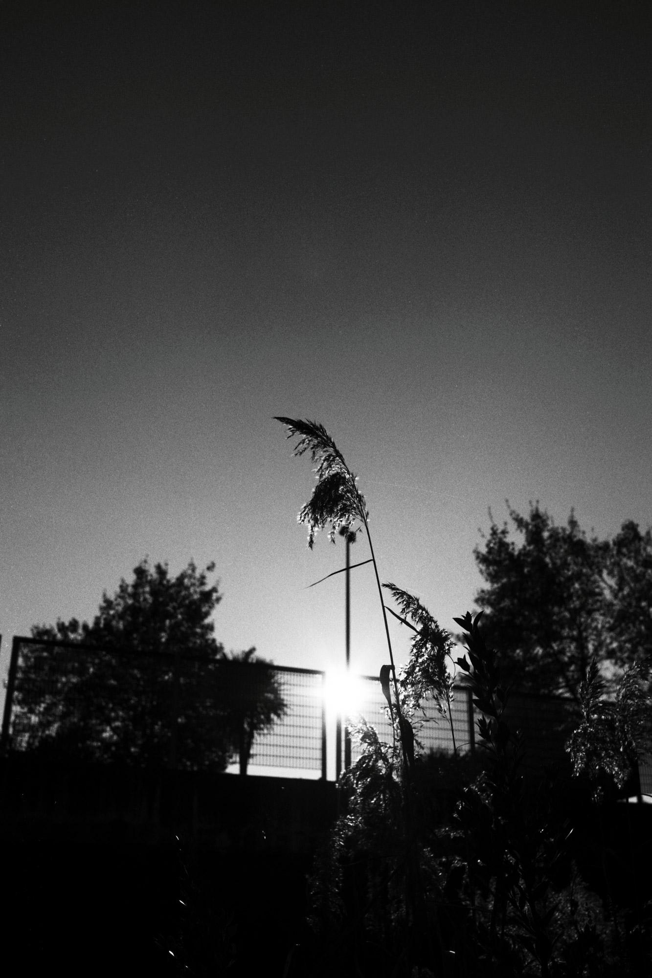 """""""Sun for horizon"""" - Les Machines de l'Île de nantes (2020). Kodak T-Max 100 ASA. © Clémence Rougetet"""