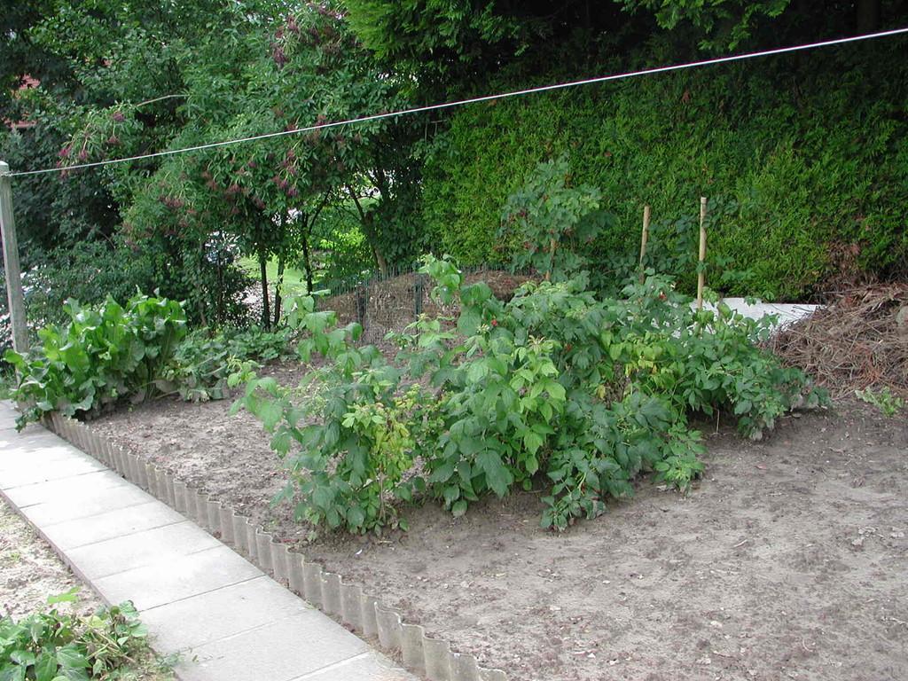 auf der rechten Seite des Gartens  waren allerlei Beeren.