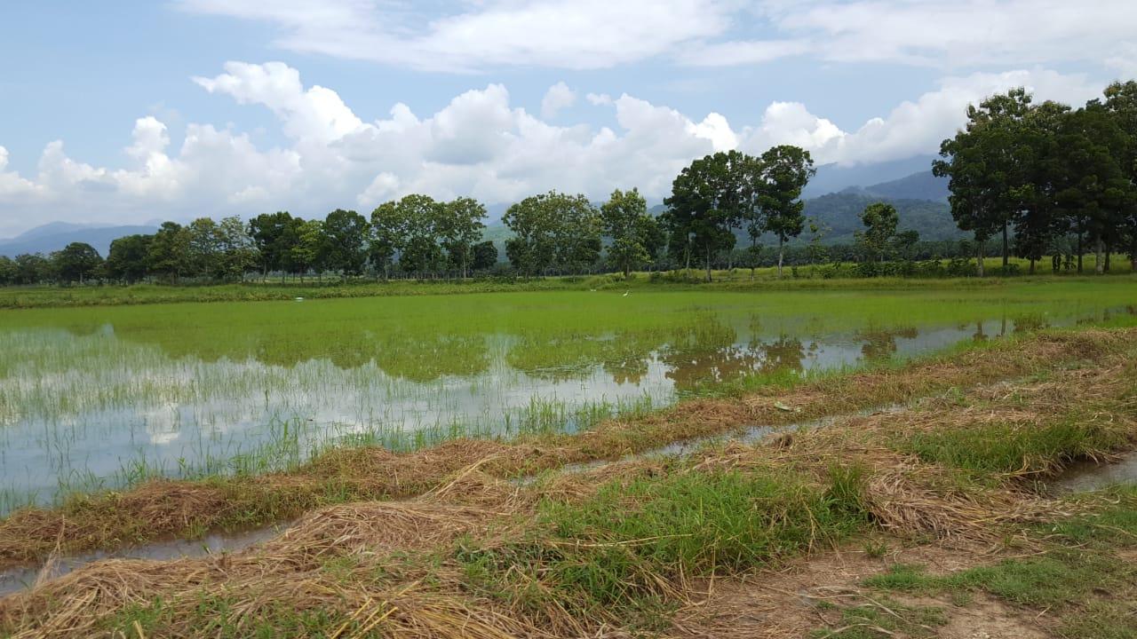 Reisfelder gibt es nicht nur in den asiatischen Bergen