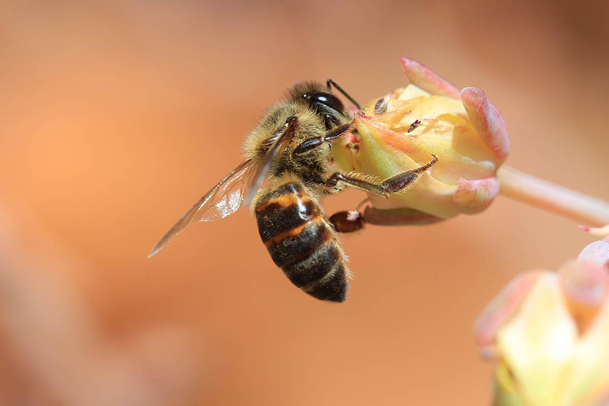 La defensa hipnótica de las abejas: crean una ola para expulsar a los depredadores ...