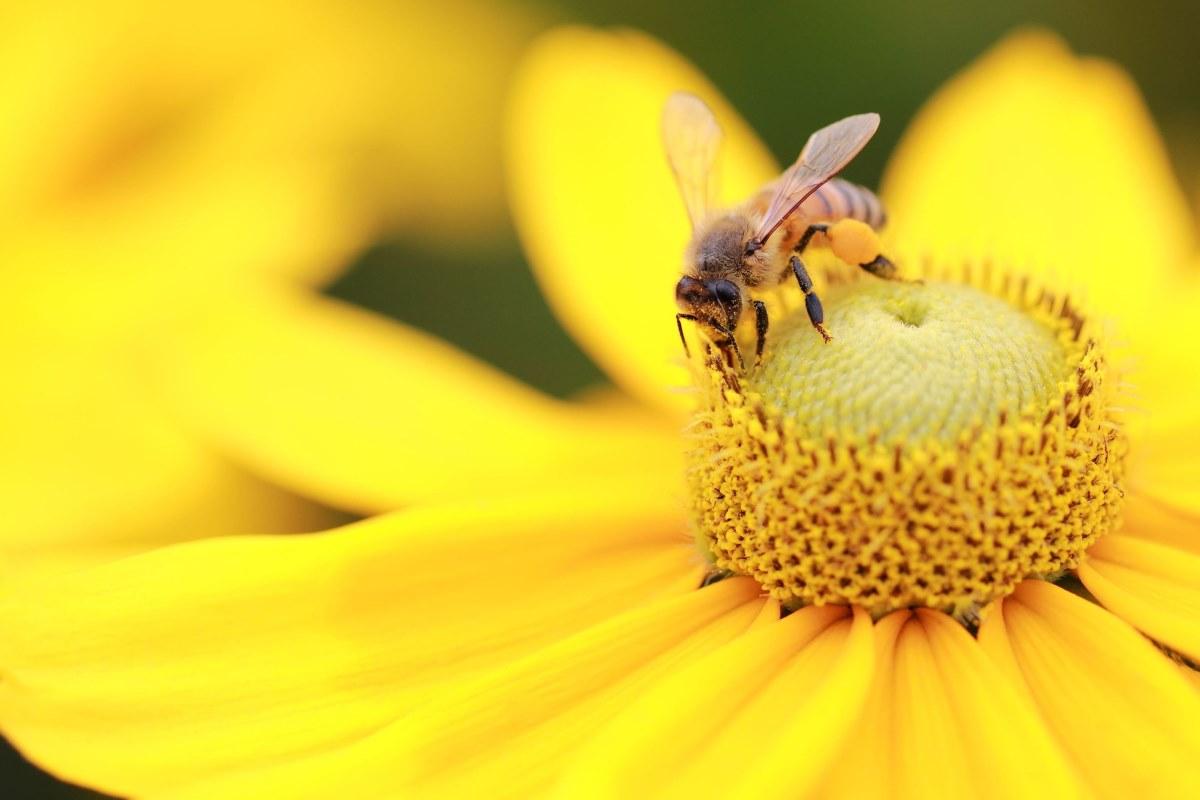 Día mundial de las abejas, cómo nació y por qué es el 20 de mayo ...